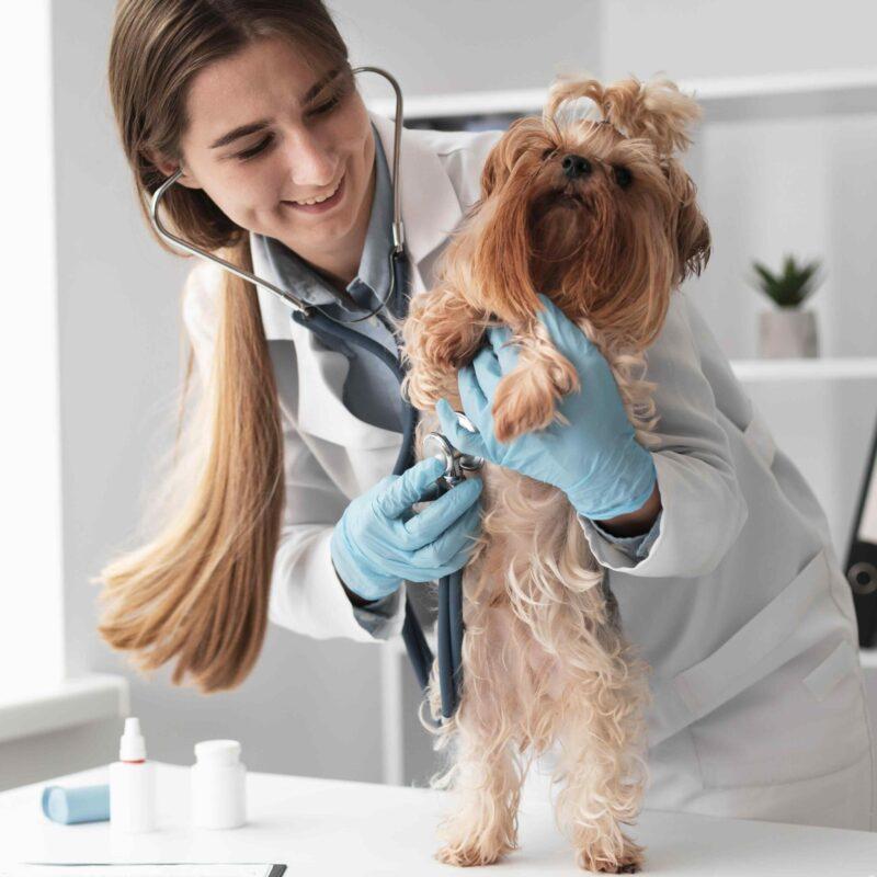 dog-checkup