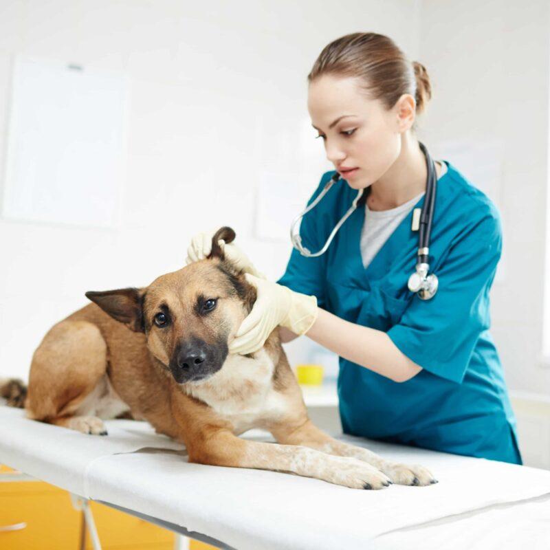 pet-care-managements