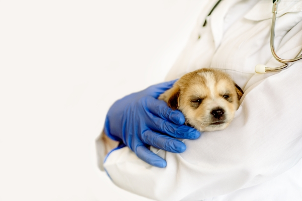 Spay-and-Neuter-Clinic