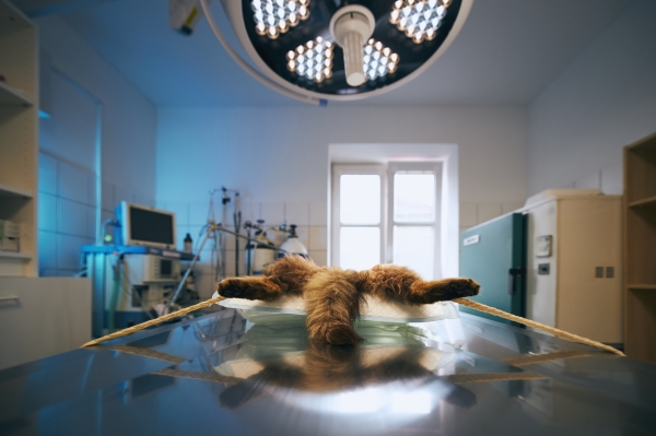 Vet-Surgery-clinic