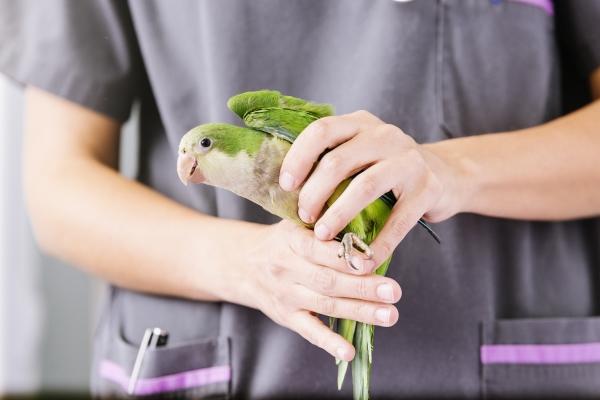 bird-care