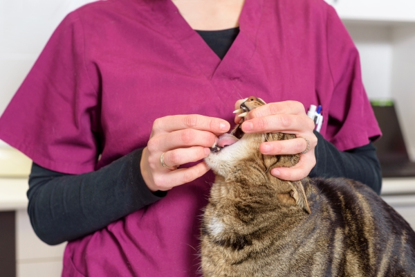 Deworming-of-cats-and-dogs
