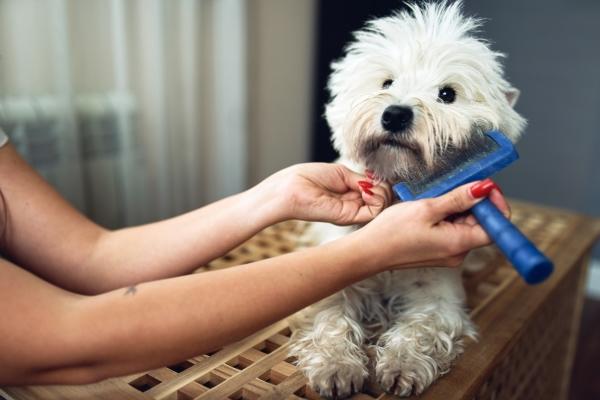 dog-daycare-services