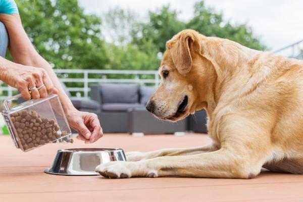 vet-Weight-management-clinic