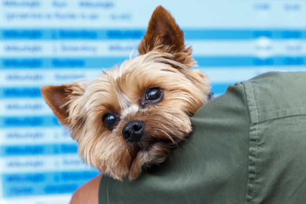 Vaccination-Pets