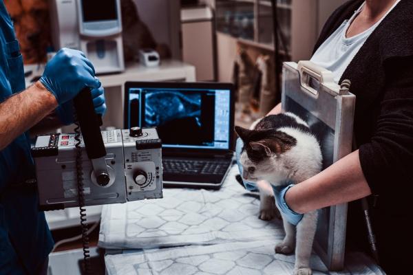 Pet-X-Ray