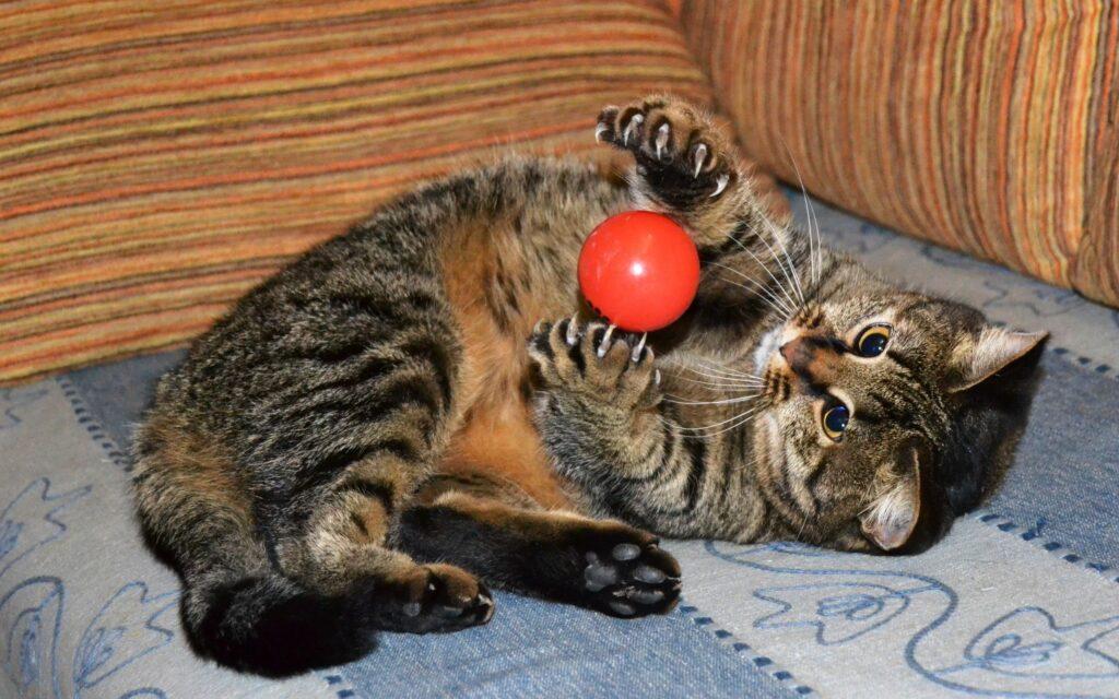 cat-staycation