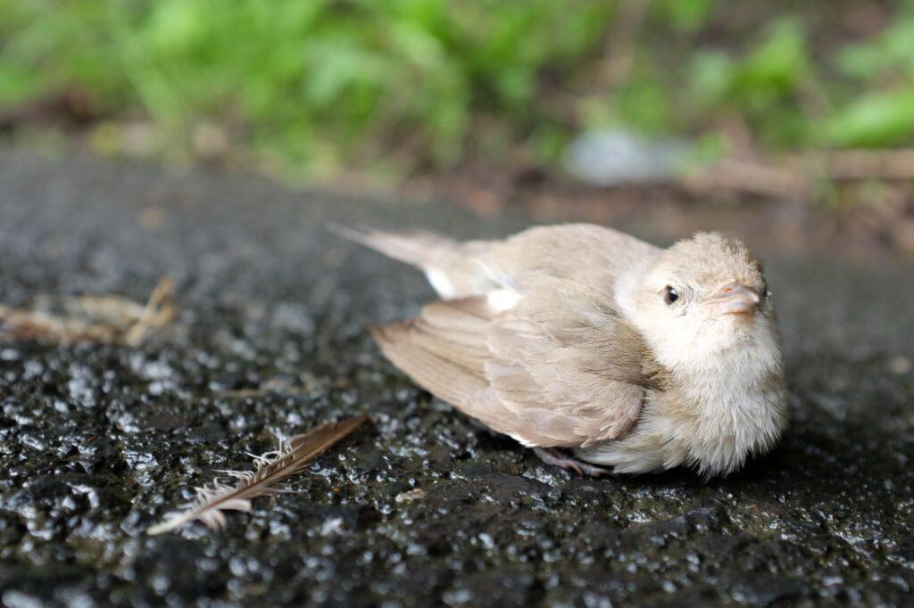 injured-bird