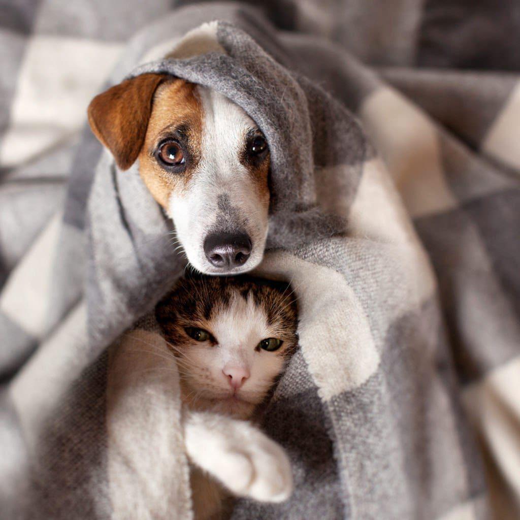 pets-in-winter