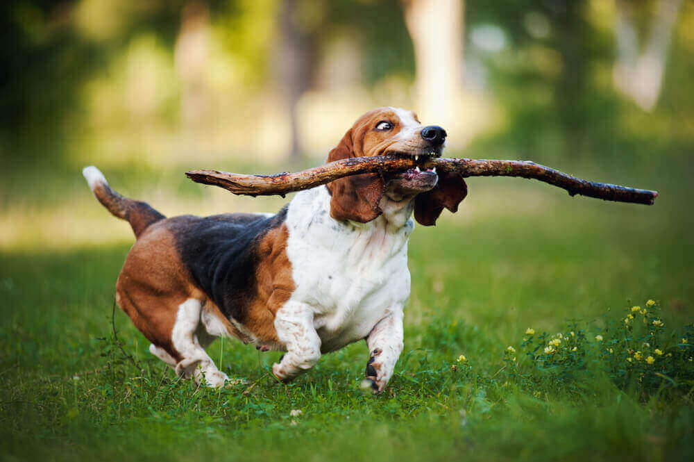 dog with stick in its mouth