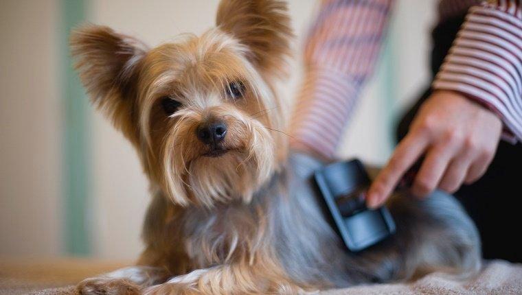 Benefits of dog grooming in winter