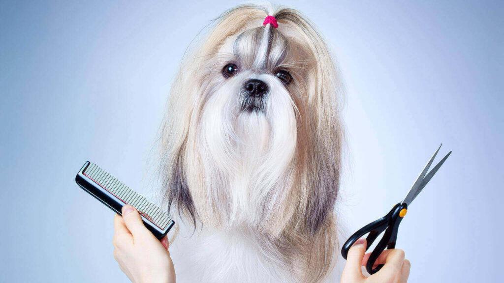 Summer dog grooming Tips