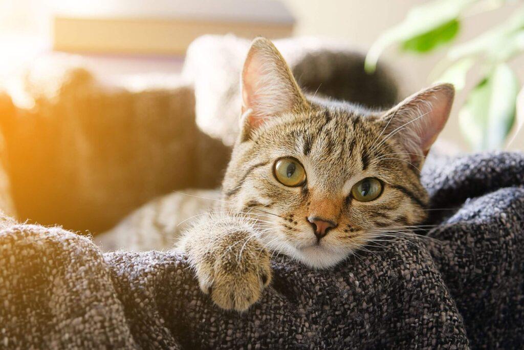 catbehaviour
