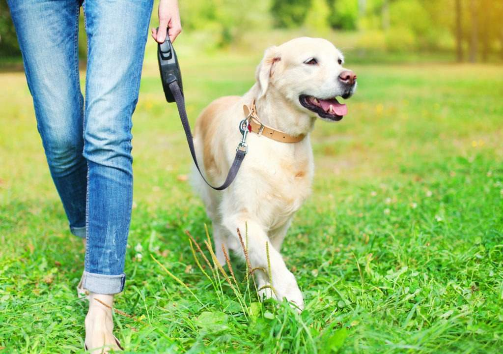pet healthy and active